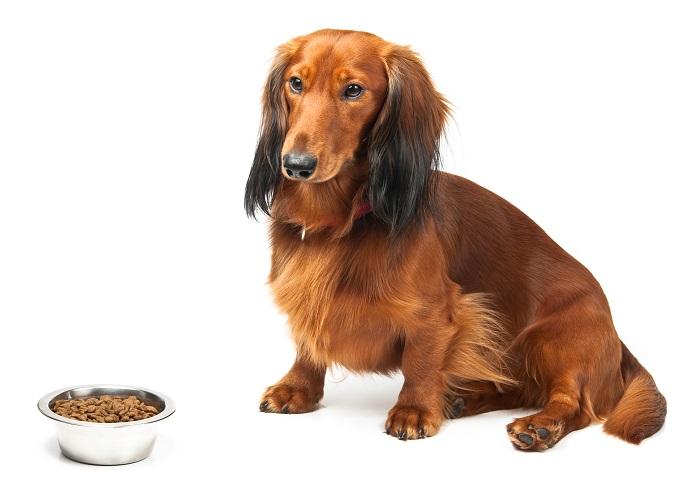 Er traut dem Braten nicht: Ob das Futter wohl vom Aldi ist?