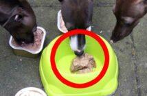 Plastik im Hundefutter und die Gerüchteküche?