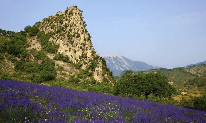 Wer seine Unterkunft hier in der Nähe findet, kann die ganze Schönheit der Provence genießen – Berge und Meer, riesige Lavendelfelder und wunderbare Wander- und Radwege.(#02)
