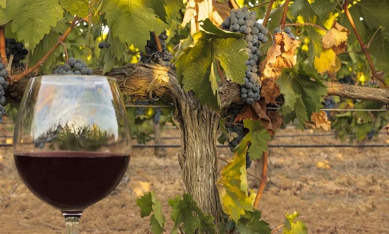 Wer also die Gelegenheit zum Einkaufen in Frankreich bekommt, sollte als Weinliebhaber unbedingt im Burgund vorbeischauen. (#03)