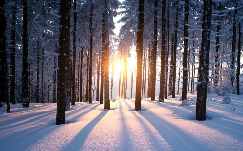 Ideen zur Weihnachtsfeier: Vor Ort wird dann der Baum für das Fest selbst geschlagen. (#07)