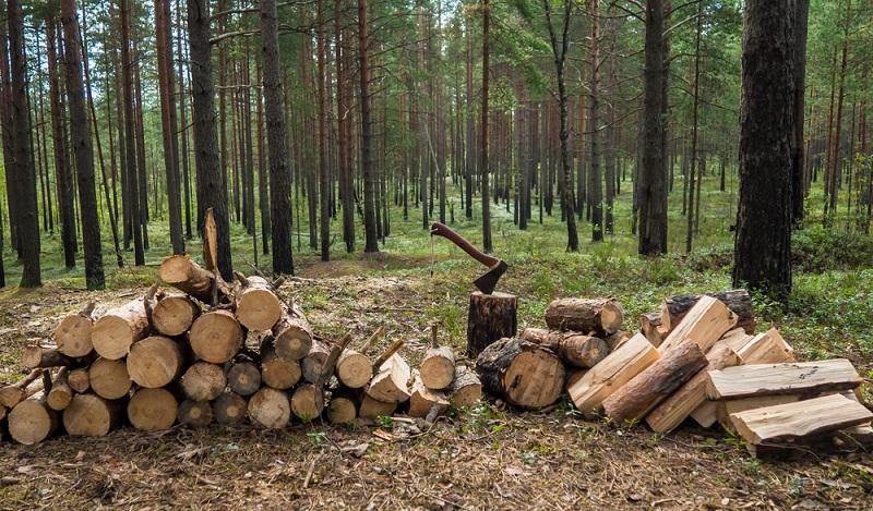Möchten Sie selbst in den Wald gehen und das Holz schlagen oder wollen Sie es lieber fertig im Baumarkt oder Holzhandel kaufen? Erst später folgt die Frage nach der richtigen Lagerung des Brennholzes. (#01)