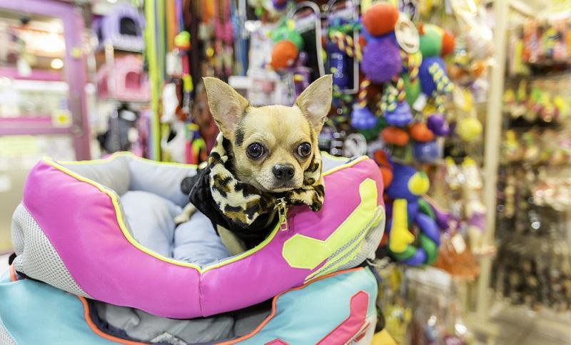 AMAZON, FRESSNAPF, PLATINUM und Co. Erfahrungen: Nicht nur Hundefutter, sondern auch eine Menge Zubehör wird für den Hund benötigt.
