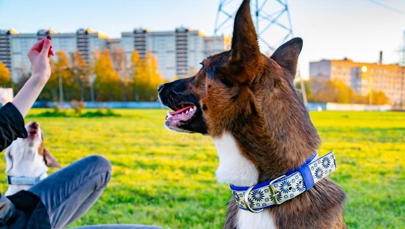 Bei Hundefutter habe ich mit PLATINUM gute Erfahrungen gemacht. Halsbänder kaufe ich eher bei kleinen Manufakturen.