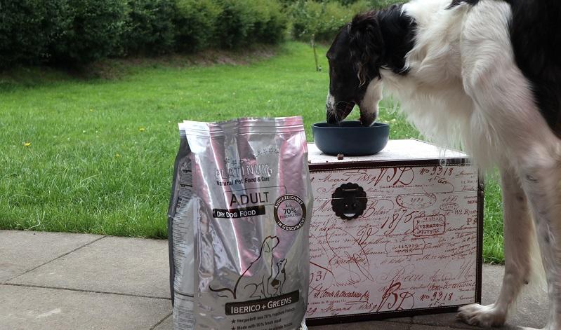 PLATINUM Hundefutter Test: Yona frisst die Sorte IBERICO+GREENS.
