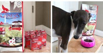 Hundefutter von PLATINUM & GENESIS im Test