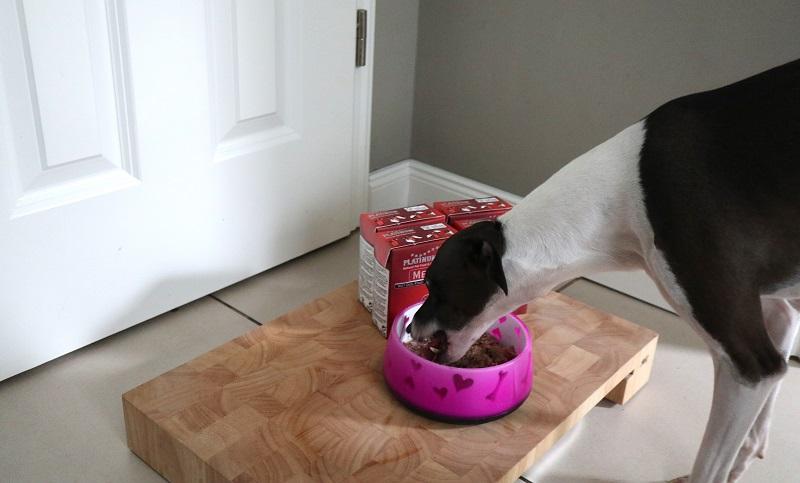 PLATINUM Hundefutter im Test: MENU BEEF+CHICKEN wird von Kiyoshi zuerst getestet.