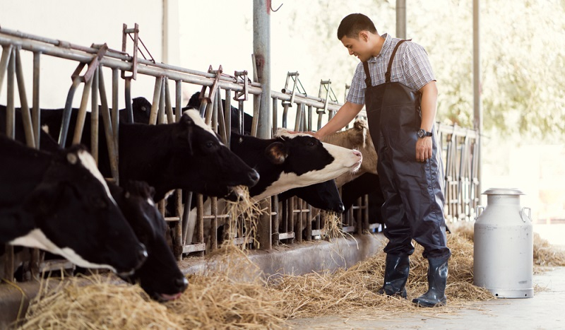 Ein gesunder Betrieb erfordert gesunde Kühe. Das ist ein sehr offensichtlicher Zusammenhang, der jedoch zu häufig von Landwirten übersehen wird.